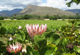 Winelands touring